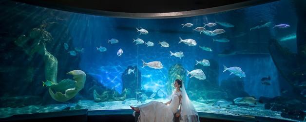 Melbourne Wedding-SEA LIFE Aquarium